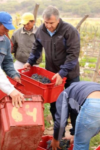 gerardo vino uvas 3