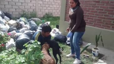 Jujuy, mugrienta: castración, en medio de la suciedad